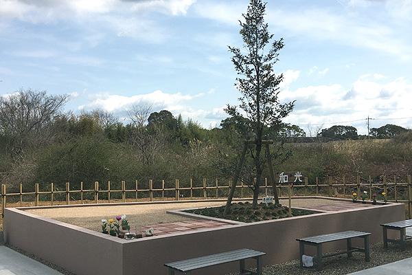 自然葬の写真